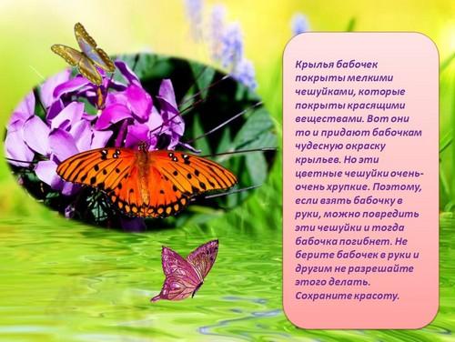 растительных рафинированных презентация на тему бабочки многом