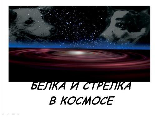 презентация на тему белка и стрелка в космосе