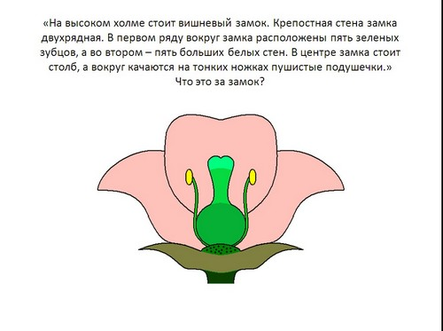 Скачать Презентация Цветок, 6