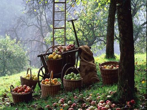 презентация дары осеннего сада и огорода
