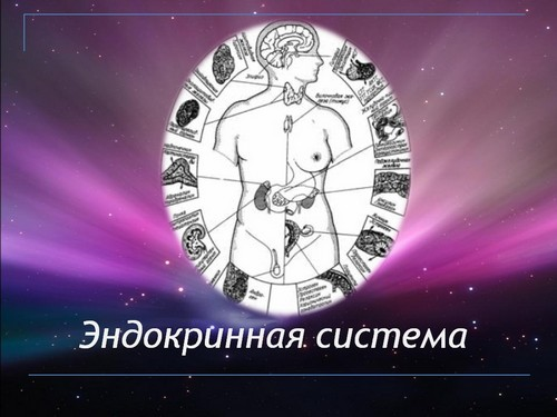 Презентация на тема эндокринные системы