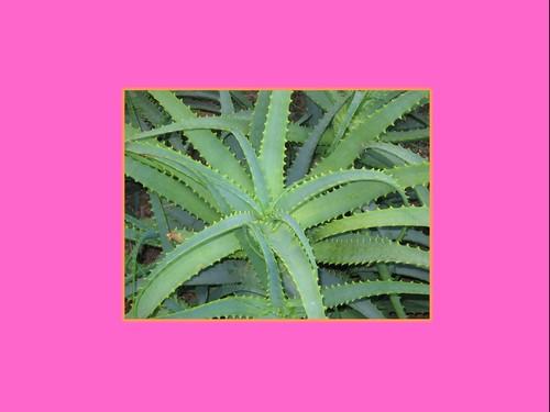 реферат комнатные растения 1 класс