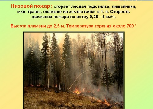 классный час пожары в лесу