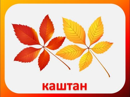 осенние листья презентации