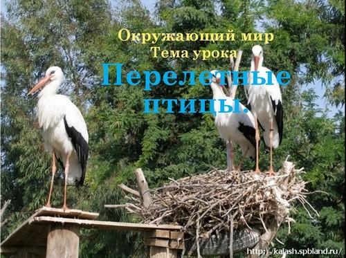 Презентация на тему перелетные птицы