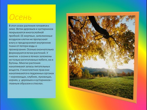 осень и зима в жизни растений презентация