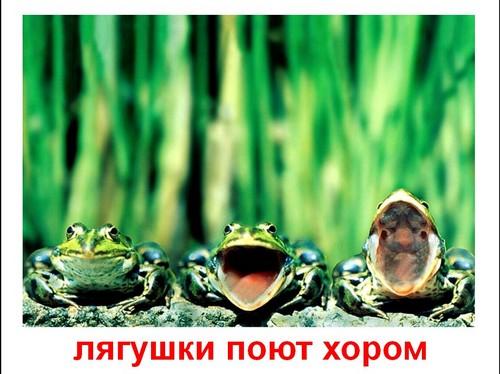 презентация смешные животные