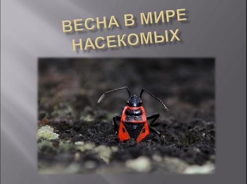Весна в мире насекомых презентация 2