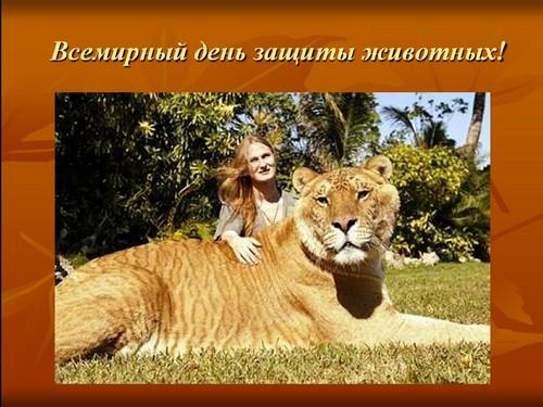 презентация всемирный день защиты животных