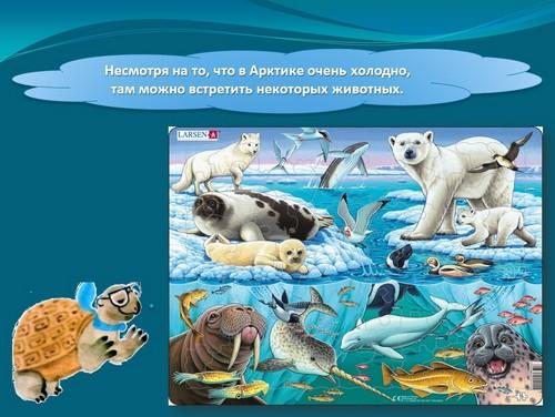 Презентация на тему животные арктики и антарктики