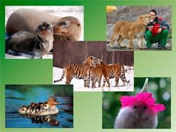 Классный час В мире животных